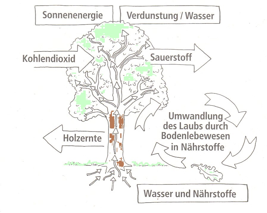 Mildenberger Verlag Gmbh Der Wald Heft 1